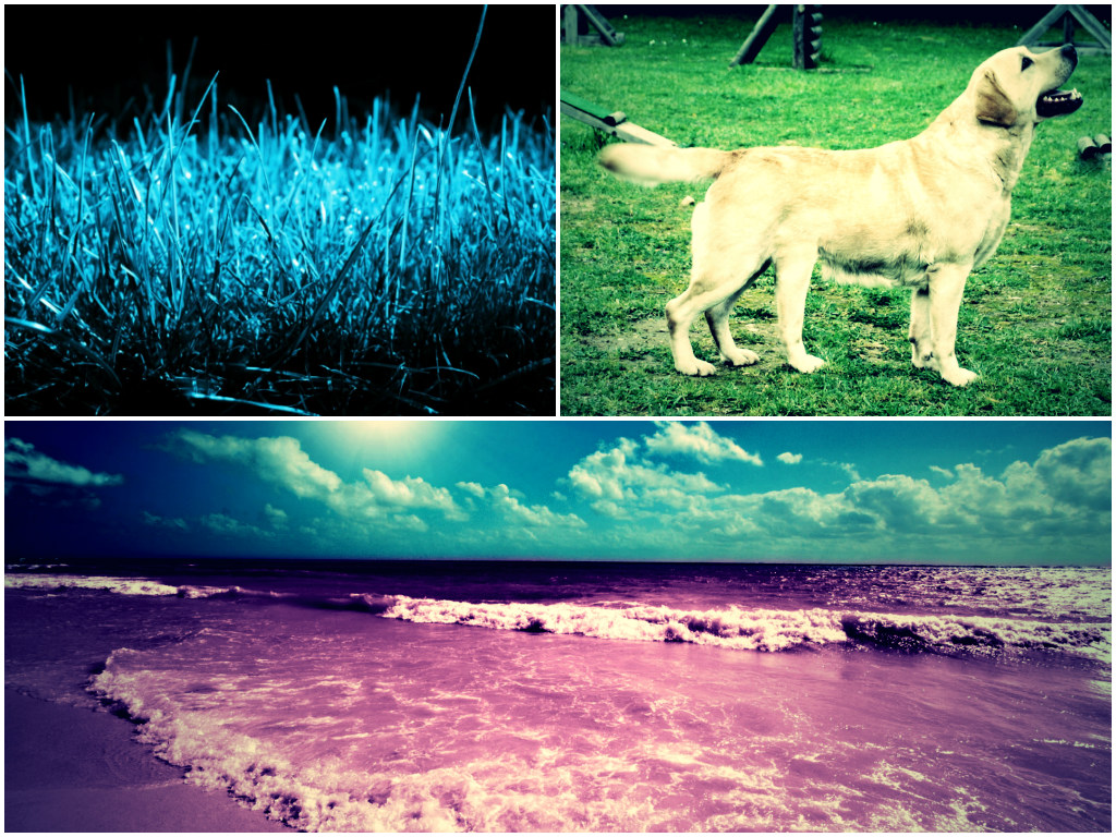 Blue Grass, 5 Legged Dog, Fuchsia Beach