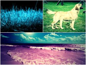 Blue Grass, 5 Legged Dog, Fuchsia Beach